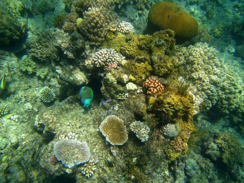 Great barrier reef 084 (800x600)