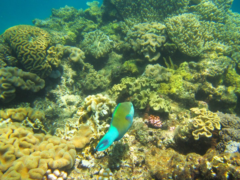 Great barrier reef 102 (800x600)