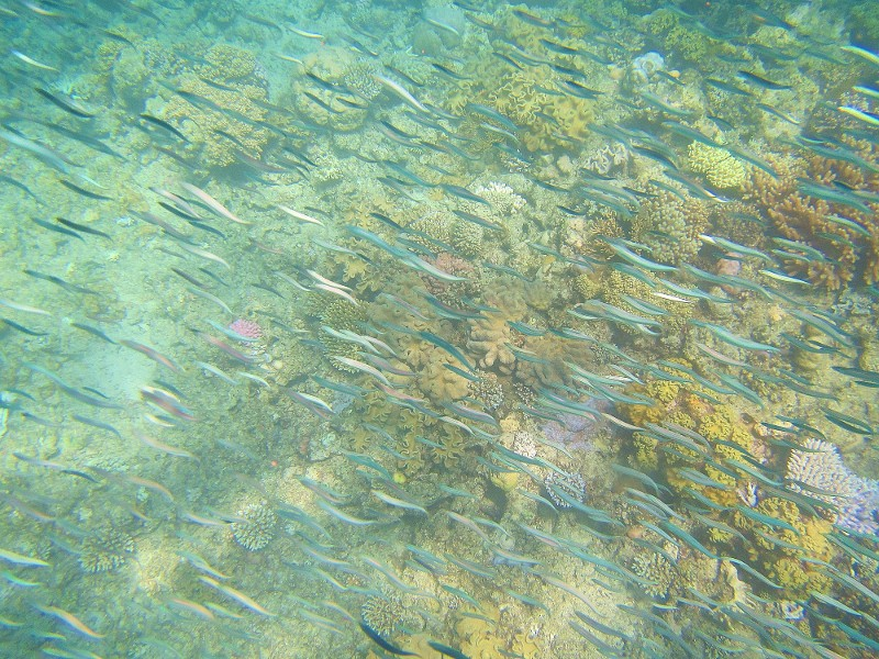 Great barrier reef 117 (800x600)