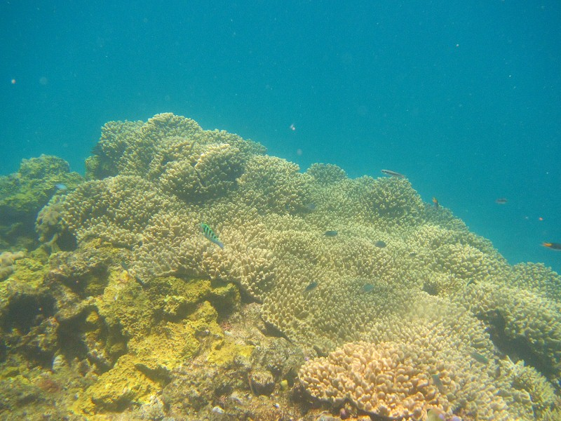 Great barrier reef 127 (800x600)