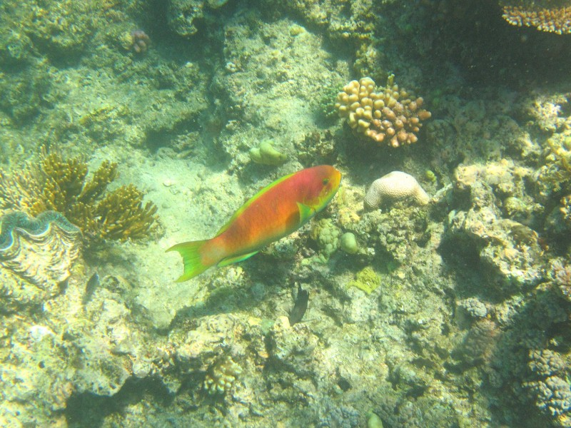 Great barrier reef 164 (800x600)