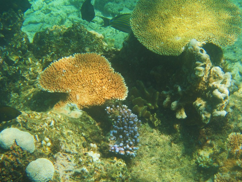Great barrier reef 191 (800x600)