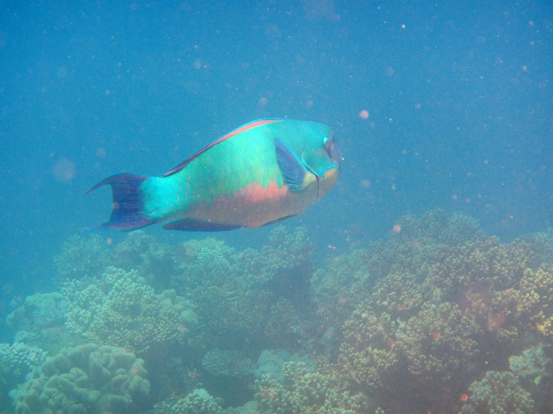 Great barrier reef 198 (800x599) (2)