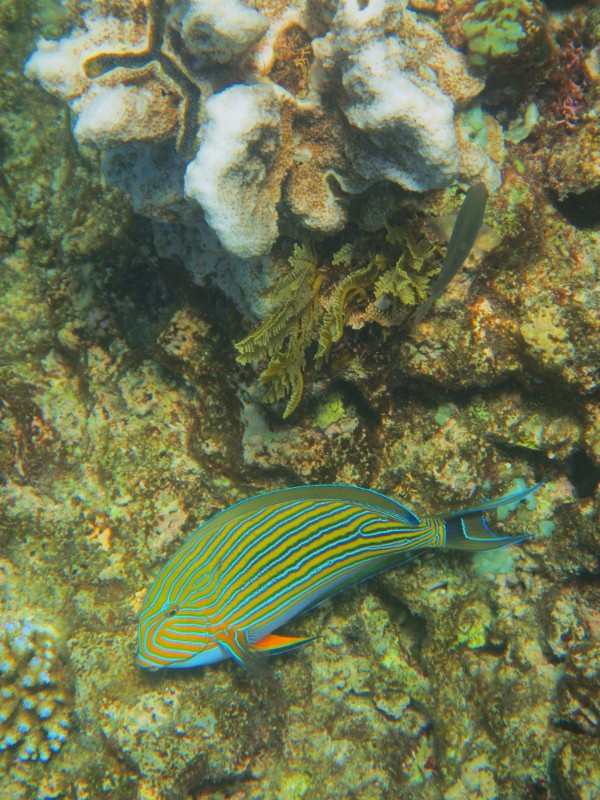 Great barrier reef 201 (600x800)
